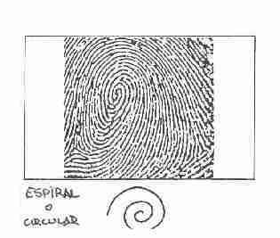 Resultado de imagen para espiral
